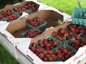 Maidstone Strawberries for sale at the Lancaster Farmers' Market, today.